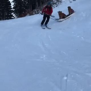 Ездовой лыжник