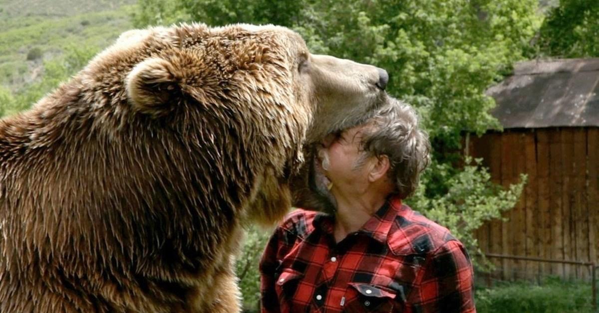 do black bears attack humans - HD2048×1363