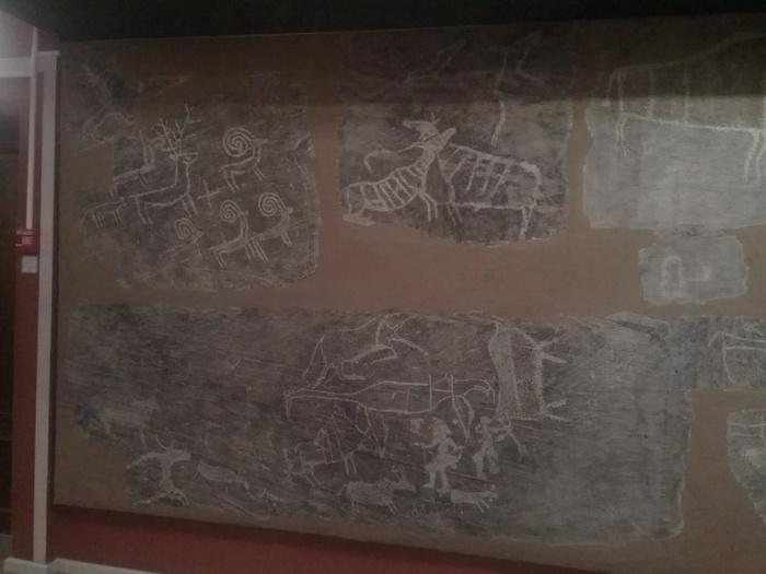 Краеведческий музей, г. Красноярск Музей палеонтологии, Красноярск, Фотография, Длиннопост
