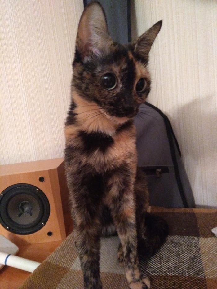 Крик о помощи Новосибирск, Кот, Новый дом для кошки, В добрые руки, Длиннопост