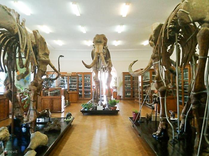 Одесский палеонтологический музей