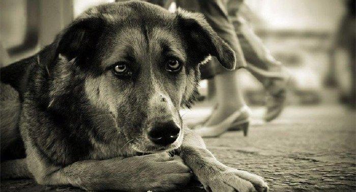Собака Собака, Стихи