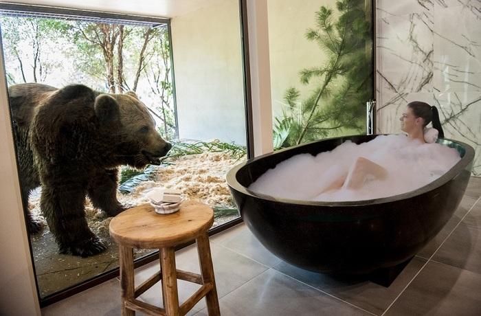 Ванна с медведем: отель Jamala Wildlife Lodge . Зоопарк, Сафари, Австралия, Отель, Длиннопост