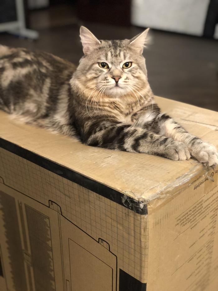 Ламповый кот хм... Геральд Кот, Кот с лампой, Теги явно не мое, Длиннопост