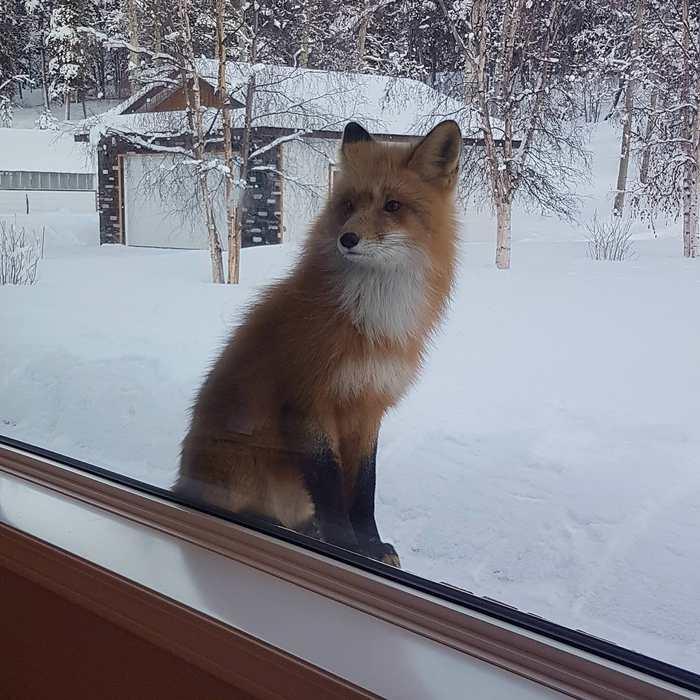 Поймал кого-то подглядывющего в окна гостиной моих родителей