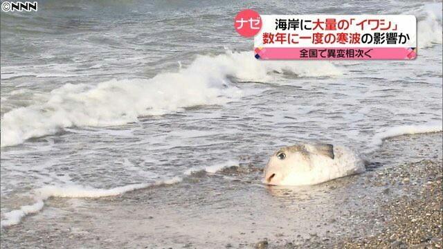 Просто уставшая рыба из кадров японских новостей Рыба, япония, Усталость