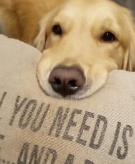 """""""Все, что вам нужно, это любовь...и собачки"""" Собака, Надпись, Подушка, Гифка"""