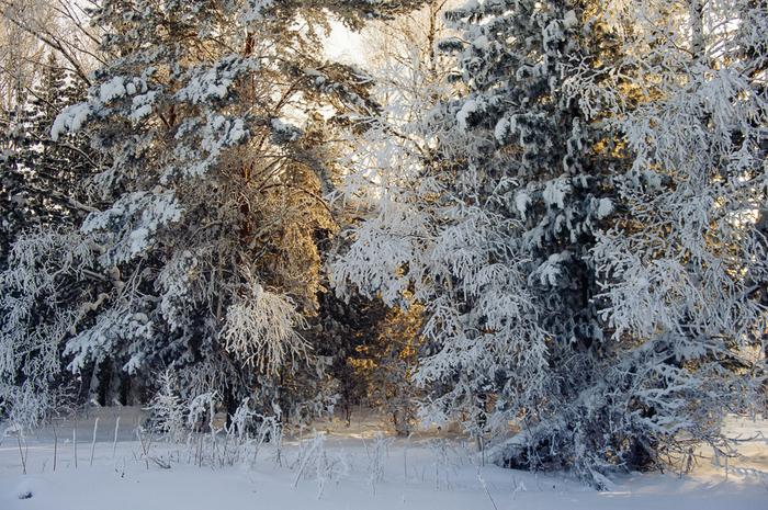 Зимний лес в Сибири Зима, Зимний лес, Солнце, Длиннопост