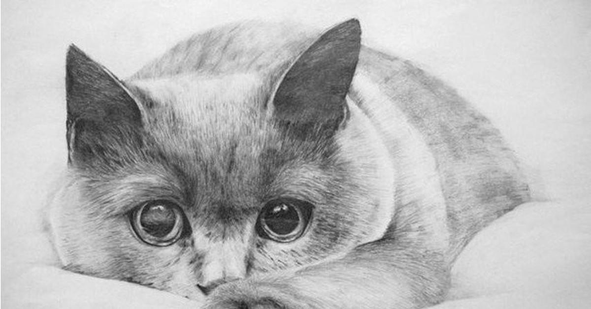 использованием нарисованы карандашом котики картинки также башня