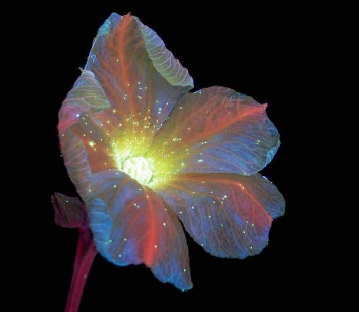 Фотографии  с применением технологии улучшающей видимость флуоресцента Ультрафиолет, Цветы, Природа, Фотография, Длиннопост