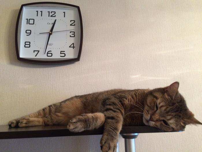 Ленивые часов не наблюдают...