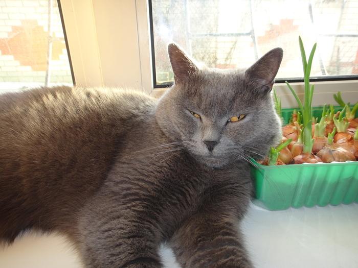 Весна в кошачьей жизни Кот, Март, Любовь