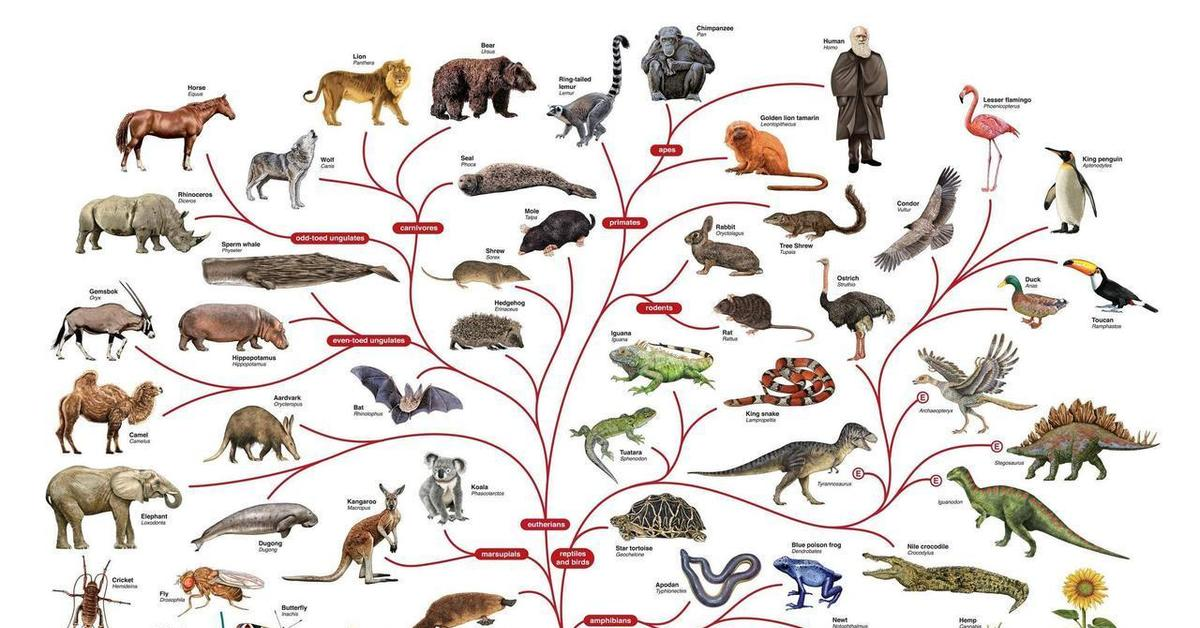evolution of animals - 1083×612