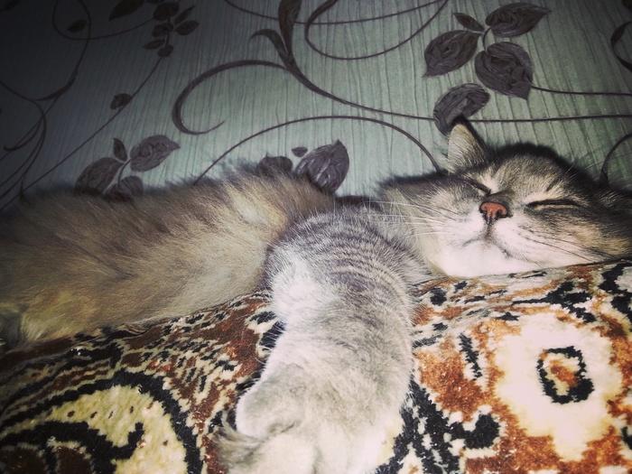 Вновь про котиков Котомафия, Котоленд, Его котейшество, Длиннопост, Кот