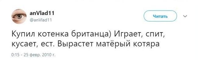 Становление кота Кот, Скриншот, Мат
