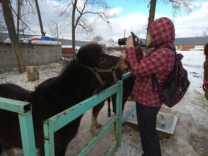 Когда пытаешься сфоткать пони Лошади, Пони, Конюшня, Фотография, Моё, Длиннопост