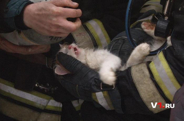 Реанимация кошки: животное возвращается с того света в руках спасателей кот, спасатель, мчс, волгоград, спасение животных, реанимация, пожарные
