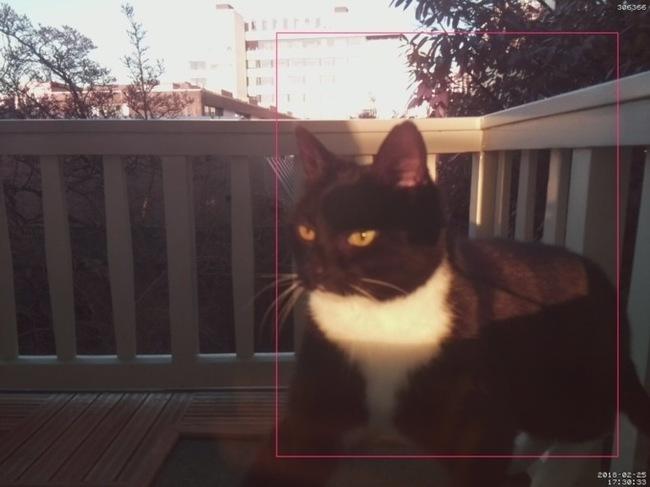 Голландский инженер сделал систему распознавания морды своего кота, чтобы пускать его домой Кот, Котомафия, TJournal, Новости, Длиннопост, Гаджеты, Изобретения