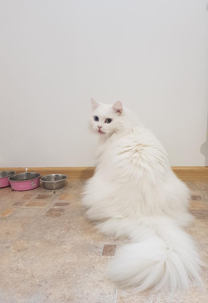 Все кошки, все коты и все котяяяята...))) С кошачьим праздником!!!