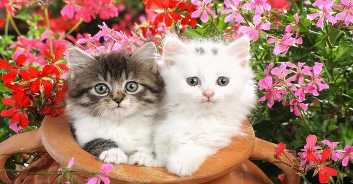 cute kittens pictures