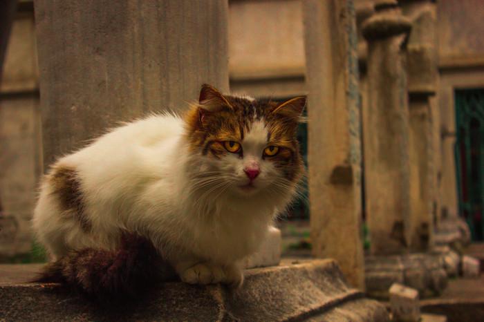 С прошедшим днем кошек в России :) Кот, Котомафия, Путешествия, День кошек, Длиннопост