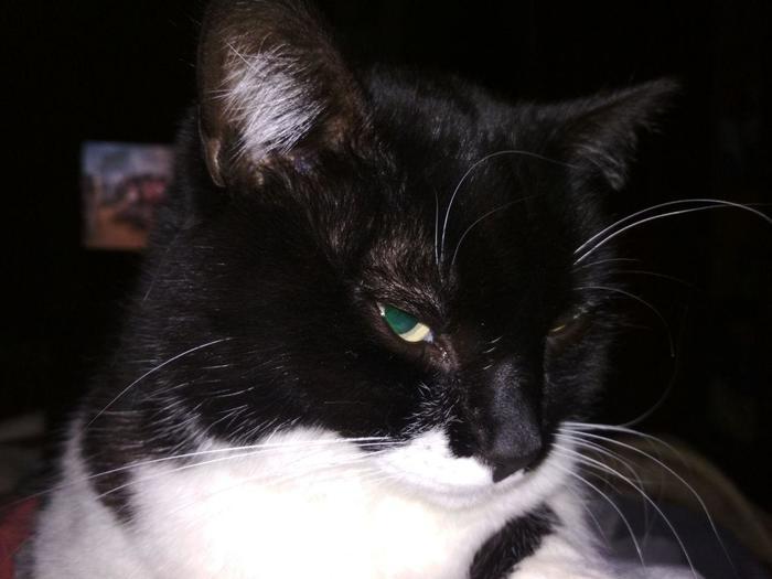 Мой кот смотрит на меня так как будто хочет спросить :- Где мои бубенчики , Саммер?