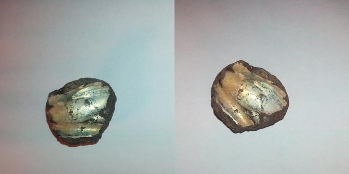 Что это за камешек? Камень, Парк, Археология, Динозавры, Отпечаток