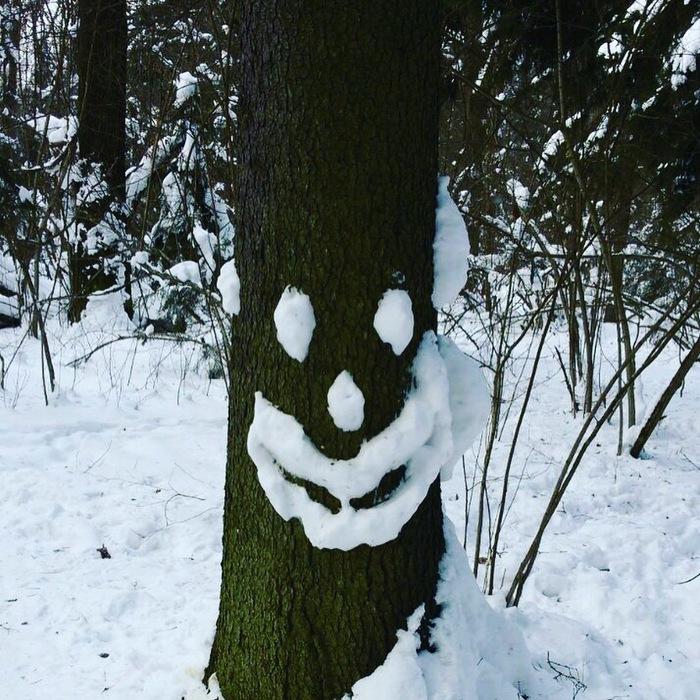 Снежные и смешные Лес, Прогулка, Зима, Длиннопост