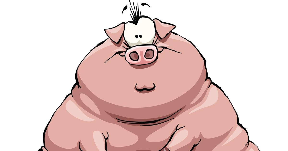 жирная свинья смешные картинки