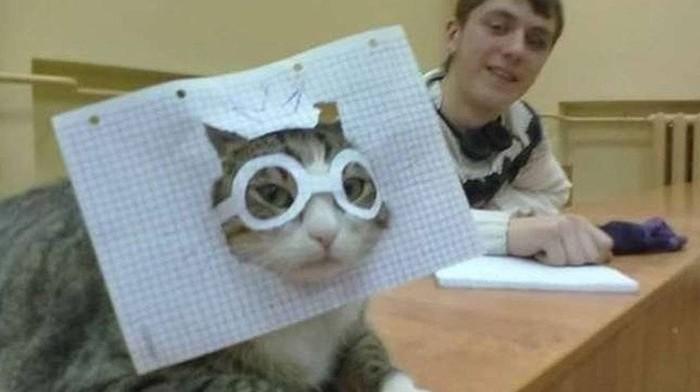 Когда на парах нечего делать Кот с лампой, Универ, Пикабу, Facebook, Кот, Жалко