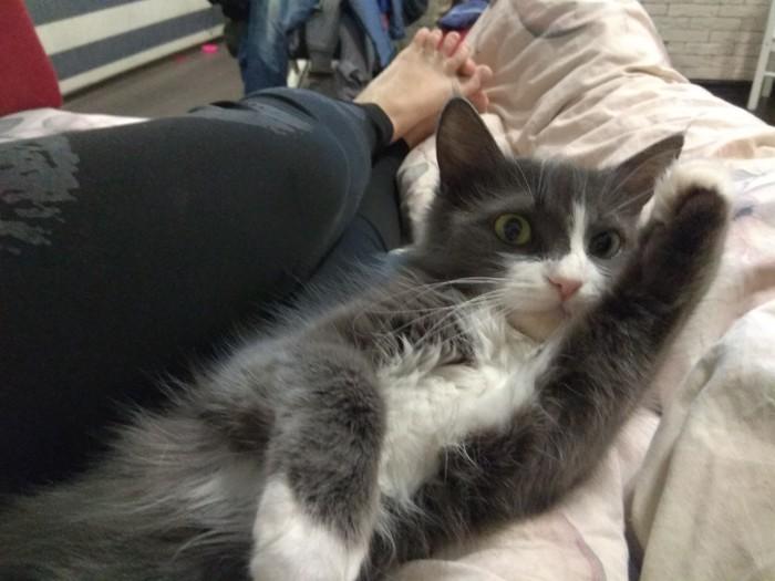 Моя кошка Кот, Моё, Длиннопост