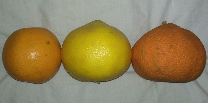 Лорен овощи и фрукты в жопе каталог пизда
