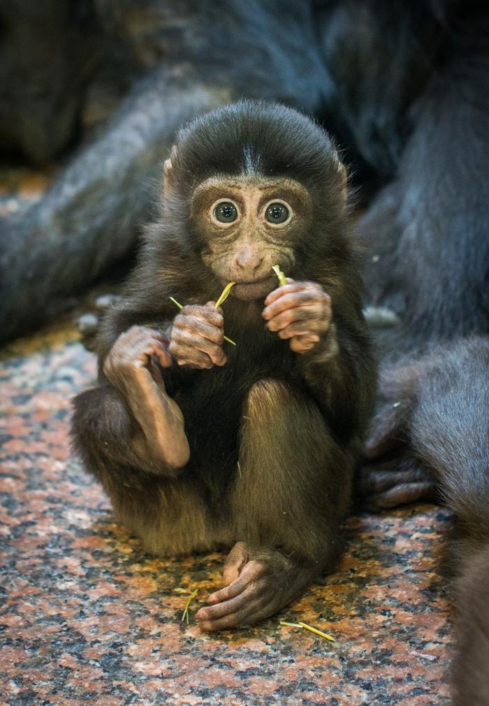 Маленький обезьян