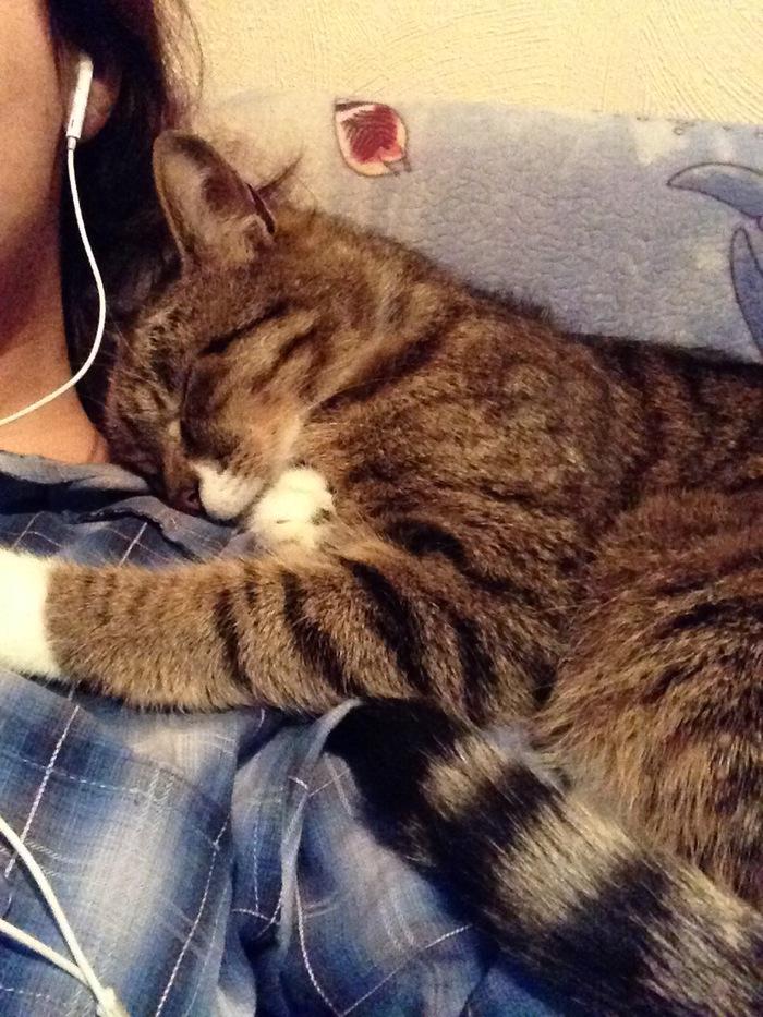 Как я приручила кота