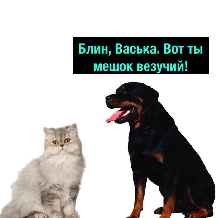 Стоило ли оно того? Деградач, Кот, Собака, Бубенчики, Длиннопост
