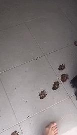 Ищем виновника следы, грязь, собака, гифка