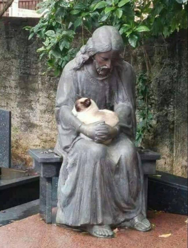Нашёл котик своё место под солнцем в надёжных руках... :)