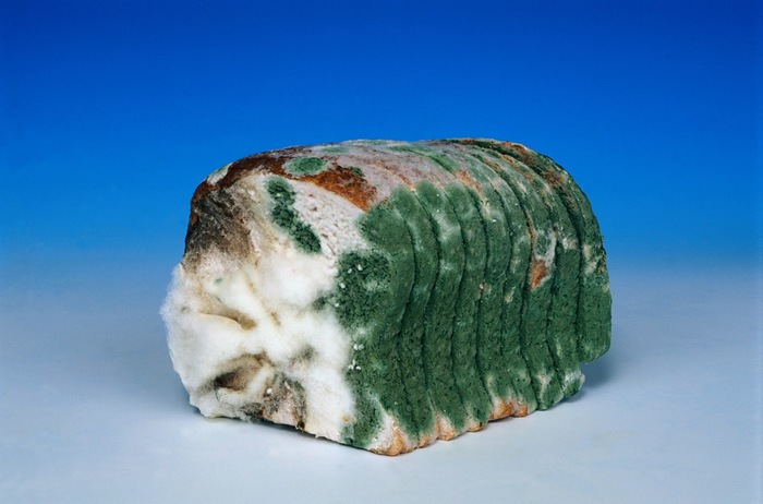 Что будет, если есть хлеб с плесенью?! Хлеб, Плесень, Длиннопост