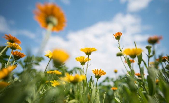 Воспоминания о Лете. Природа, Пейзаж, Фотограф, Лето 2017, Цветы, Nikon, Длиннопост, Подборка фотографий