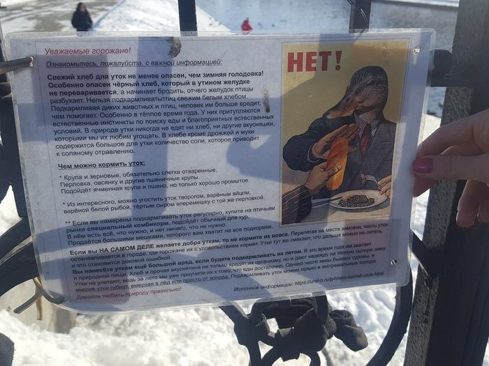 Не кормите уток хлебом) утка, Екатеринбург