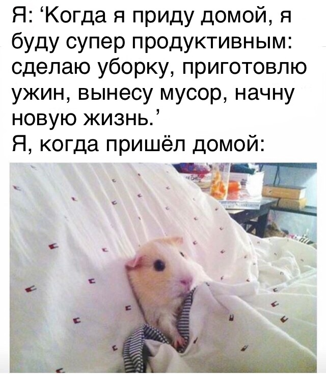 https://cs9.pikabu.ru/post_img/2018/03/14/10/1521045769152197188.jpg