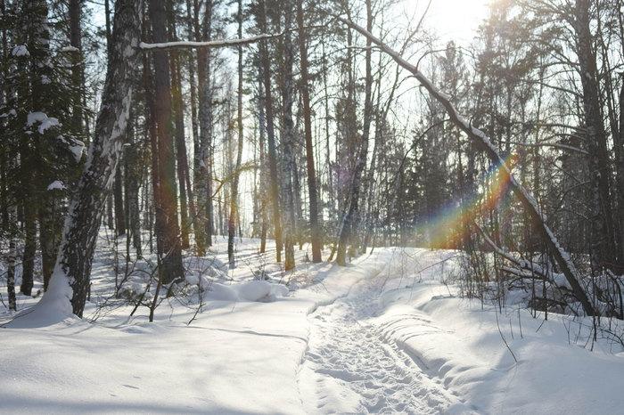 Солнечный Сибирский лес Сибирь, Красноярский край, Солнечно, Фотография, Длиннопост