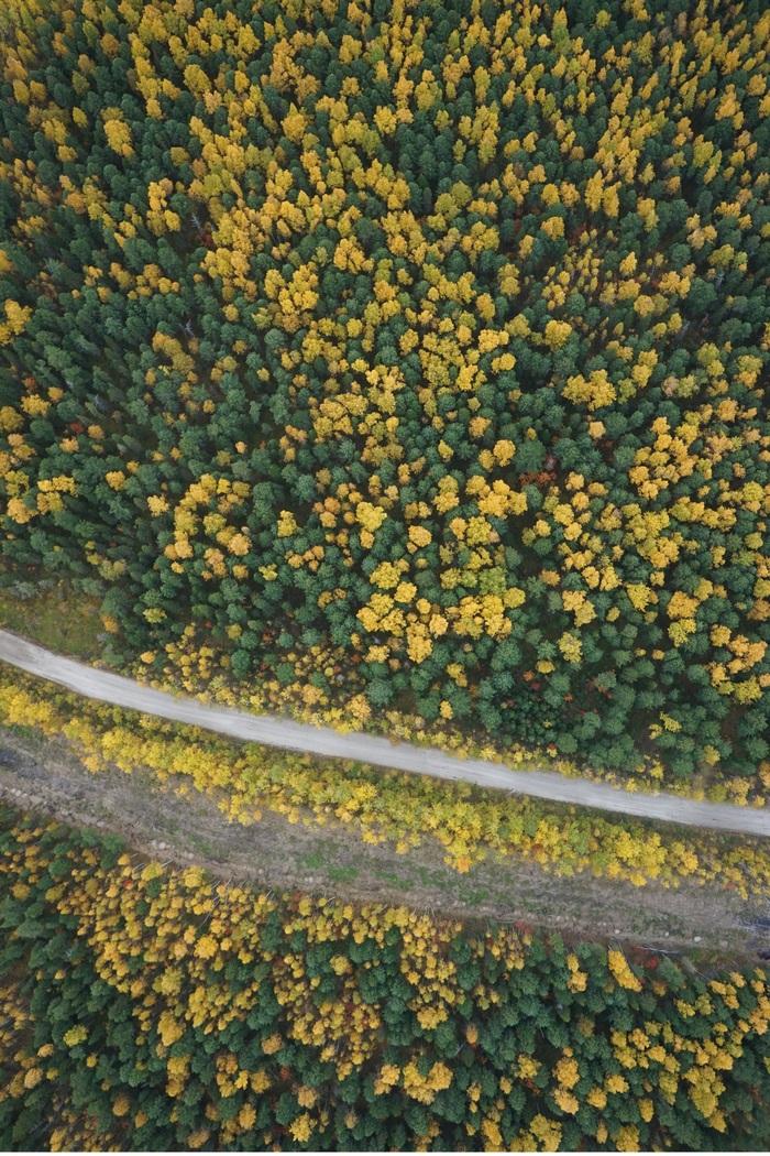 Осенние фотографии с БПЛА просматривать приятнее