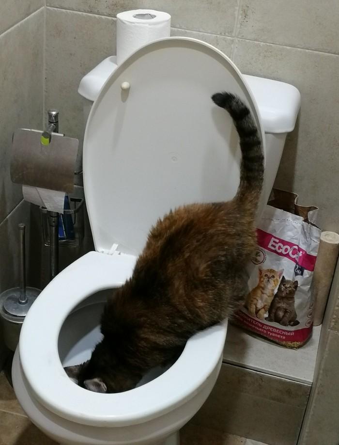 Фетиш моей кошки Кот, Фетиш, Питомец, Длиннопост, Унитаз, Туалет