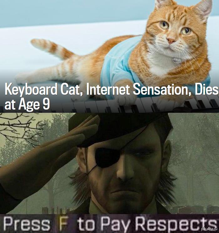 Интернет сенсация Keyboard Cat умер на 9 году жизни Кот, Keyboard cat, Press f to pay respects, Видео, Картинки, Смерть