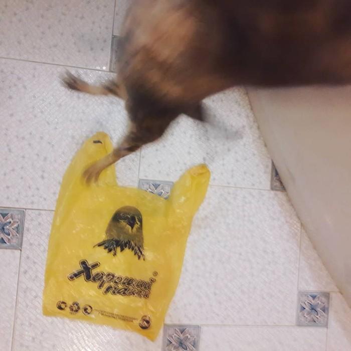 Пакет хороший, а ты - нет! Кот, Пакет, Корниш-Рекс