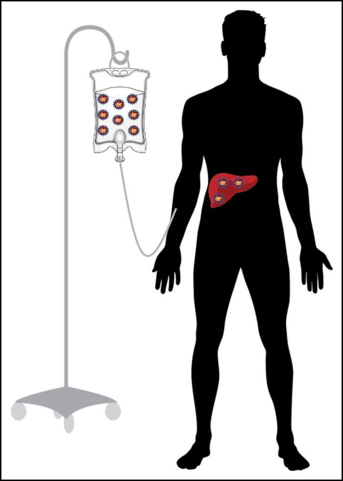 Генная терапия гемофилии. Генная терапия, Гемофилия, Медицина, Длиннопост