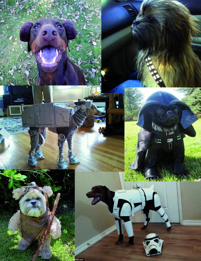 Костюмы для собак ЗВ