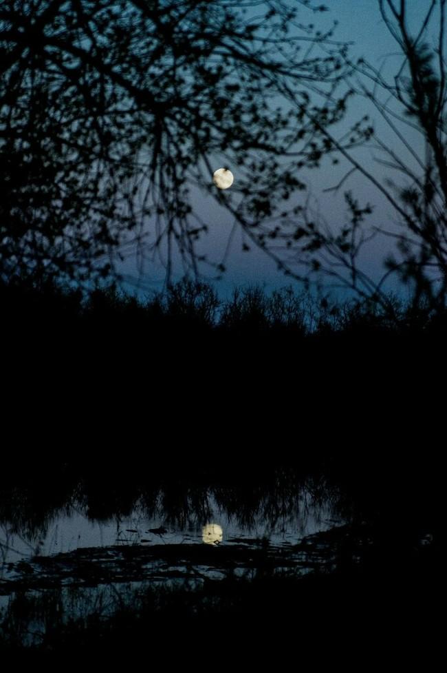 Луна Луна, Ночь, Фотография, Фотограф, Зенитар, Мануальная оптика