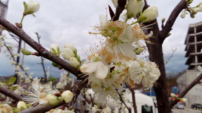 Весна! Сочи, Фотография, Цветы, Весна